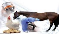 تشخيص وعلاج حالة الحيوان أو الطائر الخاص بك