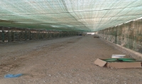 نصائح وارشادات لمزارع الحمام وتربية هواية الحمام لجميع الأنواع