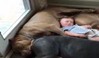 بيع 25 فيديو اجنبي طريف للحيوانات يمكنك استعماله في اليوتيوب
