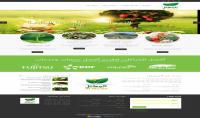 تصميم وتطوير المواقع الالكترونية