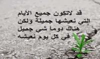 كاتبه ممتازة للمقالات باللغه العربيه