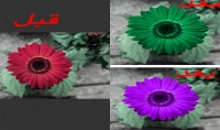 أغير لك لون أي جزء من الصوره من دون التأثير على تفاصيلها بدقه عاليه ٥ صور