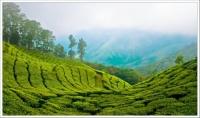 سياحة في الولاية الخلابة كيرلا الهندية او اي ولاية هندية او اي مكان سياحي في العالم