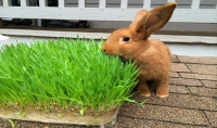 كل ما تريد معرفته عن انشاء مشروع الشعير المستنبت لتغذية الحيوانات