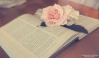 كتابة مقال باللغة العربية او تقارير او اي نوع كتابة