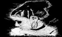 رسم صورتك scribble art  فن الخربشه