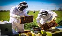 حقيبة تدريبية متكاملة بعنوان   - تربية النحل وإنتاج العسل   -