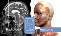 تدريب طبي على التشريح والأشعة Anatomy amp;Radiology  باحترافية