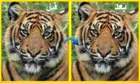تحسين جودة 5 صور وزيادة ابعاد الصورة إلى 4 اضغاف